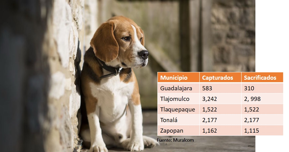 De 8,686 perros y gatos hallados en calle sólo 564 volvieron con dueño