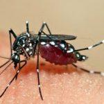 Aumentan casos de dengue, Guadalajara con más enfermos