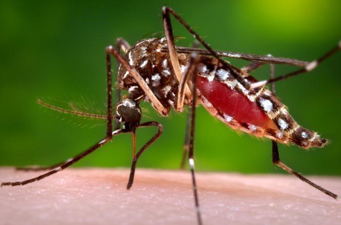 Invitan a prevenir el dengue con el «Día D